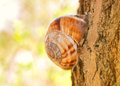 Snail sitting on tree Stock Photos