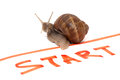 Snail sportsman on start on red line near start inscription on white background Stock Images