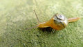 A snail on the stone Royalty Free Stock Photography