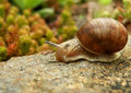 Snail on stone closeup detail of in garden Stock Images