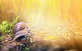 Snail in sunny grass banner for website outdoor Stock Photos
