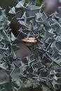 Snail on the thorn bush plants Royalty Free Stock Photo