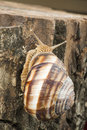Snail on tree bark studio shot Royalty Free Stock Images