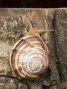 Snail on tree bark studio shot Stock Images