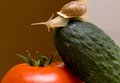 Snail on vegetables Royalty Free Stock Image