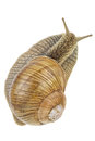 Snail. View from above. Royalty Free Stock Photo