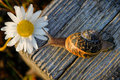 Snail on the wooden bar and flower Stock Images