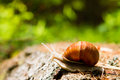 Snail  in the woods Royalty Free Stock Photos