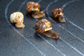 Snails on the athletic track Royalty Free Stock Photo