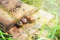 Snails gastropoda in the summer Royalty Free Stock Images