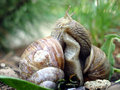Snails love Stock Photos