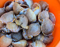 Snails for sale at vietnam markets Stock Photography