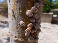 Snails on tree close up of small a Royalty Free Stock Image