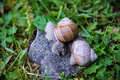 Snails two on the stone Stock Photo