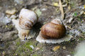 Snails two walking in nature Royalty Free Stock Photos