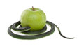 Snake coiling around a green apple Royalty Free Stock Photo