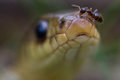 Snake head ant insect reptile scale eyes crawl slither nose mouth Royalty Free Stock Photography