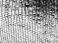 Snake leather background. Skin template. Black white pattern. Fashionable texture.