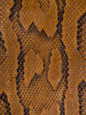 Snake Leather Texture Stock Images
