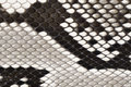 Snake skin leather material Royalty Free Stock Photos