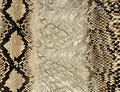 Snake skin texture Royalty Free Stock Photos