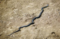 Snake slithering on the desert ground Royalty Free Stock Images