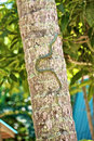 Snake on the Tree Royalty Free Stock Photos