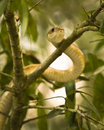Snake in a Tree Stock Photography