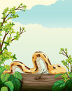 A snake on tree illustration of in green nature Stock Photo