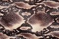 Snakeskin Royalty Free Stock Photo