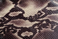 Snakeskin Royalty Free Stock Photography