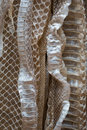 Snakeskin background closeup in costa rica Stock Images