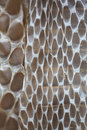 Snakeskin background closeup in costa rica Royalty Free Stock Photography