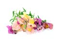 Snapdragon colorful flowers in front of white background Royalty Free Stock Photography