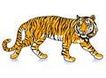 Sneak Tiger Stock Photography
