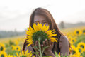 Sniffing sunflowers beautiful woman a sunflower in the open air on a sunny day Royalty Free Stock Photography