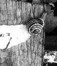 Snigel b w Royaltyfria Bilder