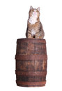 Snoopy cat on barrel white Royalty Free Stock Photography