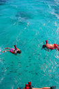 Snorkeling in Caribbean Royalty Free Stock Photography