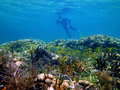 Snorkeling in the caribbean sea Stock Image