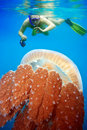 Snorkeling with jellyfish Royalty Free Stock Photo