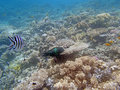 Snorkeling in the red sea near hurghada Stock Photos