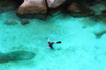 Snorkeling young boy is in tropical lagoon Royalty Free Stock Photo