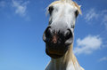 Snout a horse close up on background of blue sky Royalty Free Stock Photos