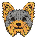 Snout of yorkie