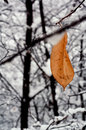 Snow abstract brown yellow in a leaf and the autumn Royalty Free Stock Images
