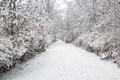 Snow alley in forest trees with branches in Royalty Free Stock Photos