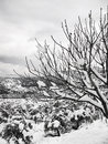 Snow on bare branches a tree with covered with Royalty Free Stock Images