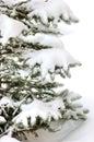Snow bounded xmas tree Royalty Free Stock Photo
