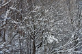 Snow on branches Stock Photo